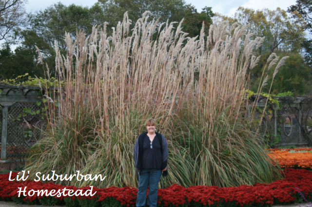 A photo of me with the ornamental grass in the lower gardens.